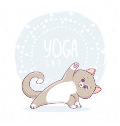 cat yoga asana vector image