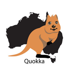 quokka animall of australia vector image
