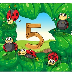Number five with five ladybugs on leaves vector image