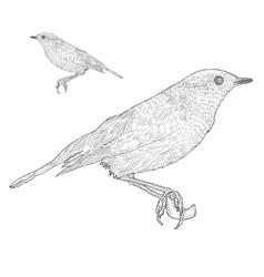 Bird sitting down on twig botanical vintage vector