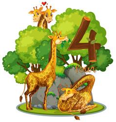 Four giraffe in nature vector