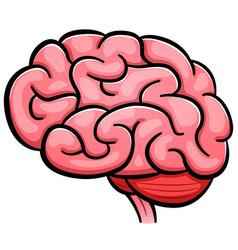 Human brain cartoon isolated vector