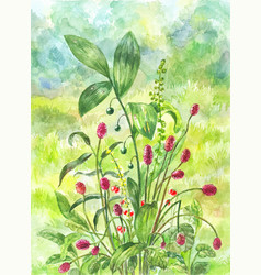 Beautiful green field with bush of healing herbs vector