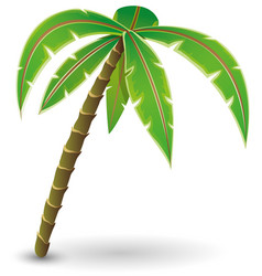 beautiful palm tree vector image