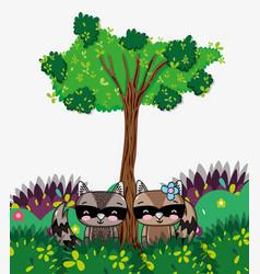 cute raccoon animal vector image