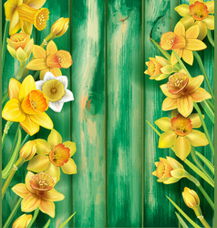 daffodils flowers on wooden background vector image