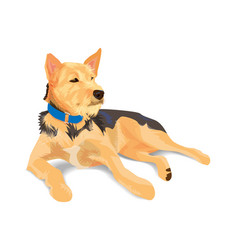 Hybrid brown dog wearing blue collar lying on vector