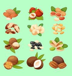 set of nuts food natural vector image