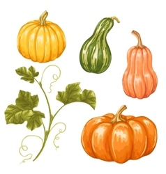 Set of pumpkins Collection decorative vegetables vector image