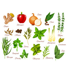 Spices and herbs icons of food ingredients vector