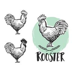 Rooster logotypes set Vintage produce elements vector image