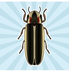Insect anatomy Sticker Firefly beetle Lampyridae vector image vector image