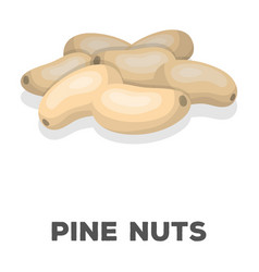 pine nutsdifferent kinds of nuts single icon in vector image