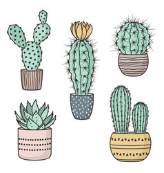 colorful cacti in pots vector image