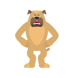 dog angry pet evil emoji avatar bulldog aggressive vector image