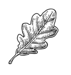 Oak leaf vintage engraved vector
