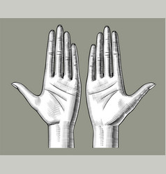 Pair female hands palm up with clenched fingers vector