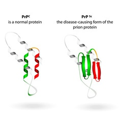 Prion vector