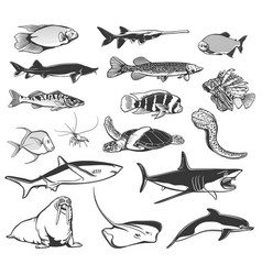 Sea fish and ocean animal isolated icons vector