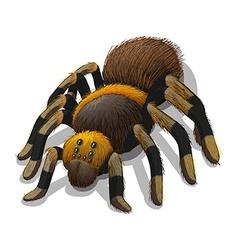 A Tarantula spider vector image
