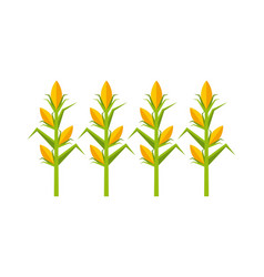 corn cultive isolated icon vector image