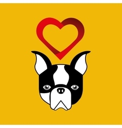 cute dog pet with french bulldog heart background vector image vector image