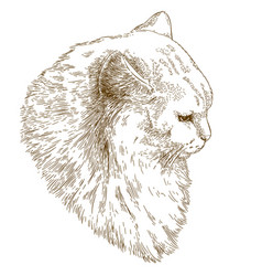 engraving of big cat muzzle vector image vector image