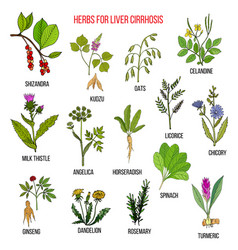 best herbal remedies for liver cirrosis vector image