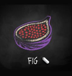Chalked sketch half fig vector
