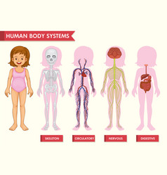 Scientific medical human body systems vector