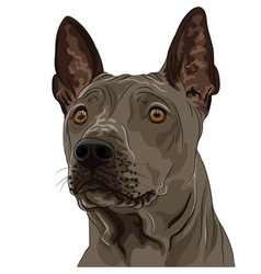 Thai ridgeback dog breed vector