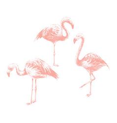 hand drawn flamingoes vector image