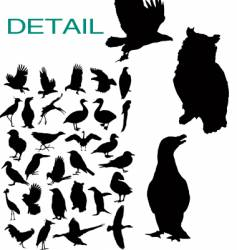 birds silhouettes vector image