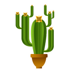 isolated cute cactus vector image vector image