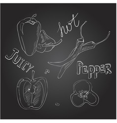 sweet and hot peppers set of hand drawn vector image