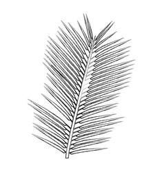 tropical palm leave jungle leaf floral vector image vector image