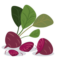 Beetroot healthy vitamins food vector