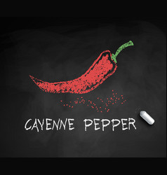 Chalk drawn sketch cayenne pepper vector