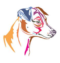 colorful decorative portrait of jack russell vector image