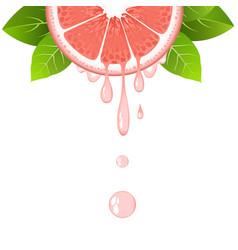 Grapefruit slice with juice drops juicy citrus vector