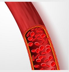 human blood vessel with red blood cells blood vector image