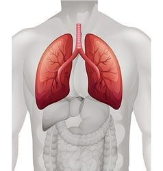 Lung cancer diagram in human vector