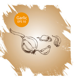 background sketch garlic vector image