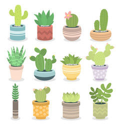 cactus nature green succulent tropical plant vector image vector image