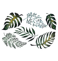 isolated of fern leaves vector image