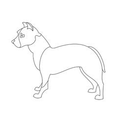 American pitt bull terrier vector image
