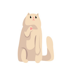 cute white fluffy cat funny pet character furry vector image