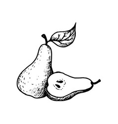 Ink drawing pear vector