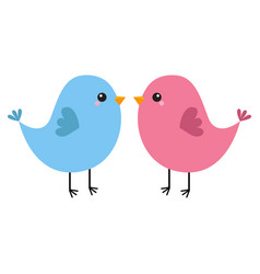 Pink and blue bird couple happy valentines day vector