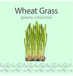 Wheat grass image vector